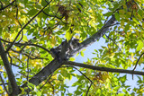 Helpless little kitten sitting on a tree branch poster