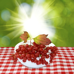 berries in a vase on a sunlight background