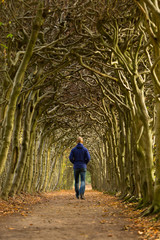 Man walking through a tunnel of trees on an autumn day.