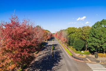 紅葉の道路