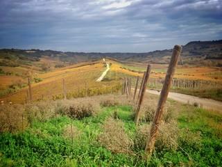 Vigneti sulle colline abruzzesi in Italia