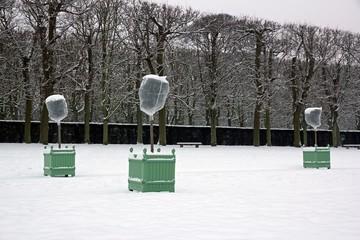 orangers sous voile d'hivernage, protection contre le froid