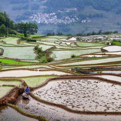 Terraced rice fields in Yuanyang, China