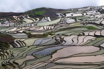 Terraced rice field in Yuanyang, Yunnan province, China