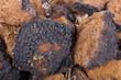 Chaga (Inonotus obliquus) closeup - 73101519