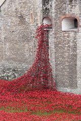Poppies at The Tower of London London UK