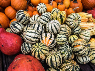 Colorful pumpkins collection on the farmers Market
