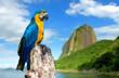 Quadro Blue and Yellow Macaw in Rio de Janeiro, Brazil