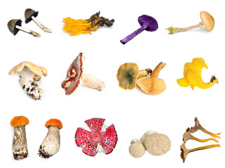 Collection of colorful mushrooms on white background