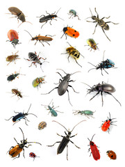 Collection of many diffrent colorful beetles on white background