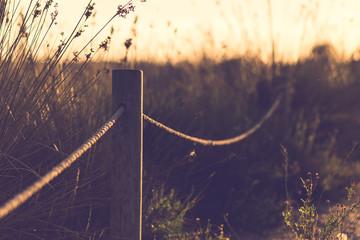 Beautiful image of sun shining and back lighting countryside lan