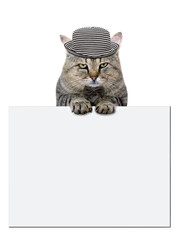 cat rests on a blank banner on white background