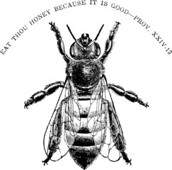 Vintage graphic insect honeybee
