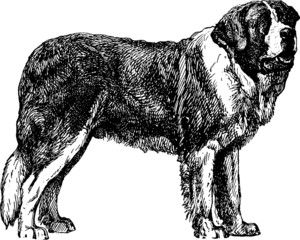 Vintage Illustration St. Bernard dog