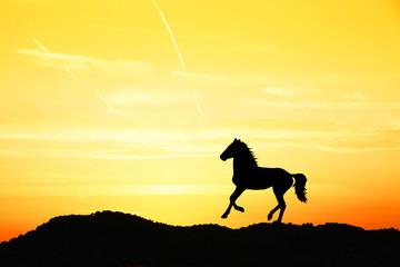 caballo en la montaña a contraluz en el atardecer