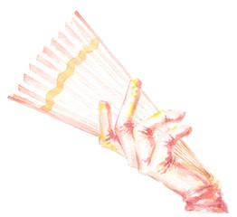 Female hand holds fan