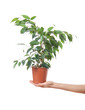 Female hand holding a potted plant, isolaterd on white