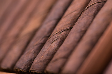 cigars in open humidor. close up