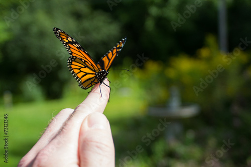 canvas print picture Monarch Butterfly Release