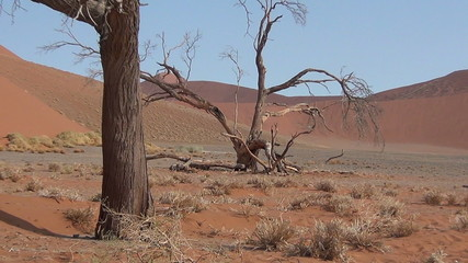 Tree in the desert namibia