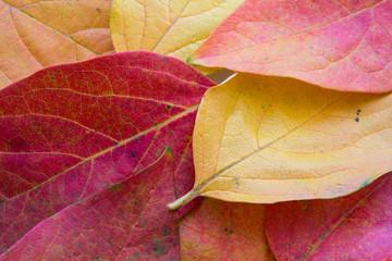 minimal autunno