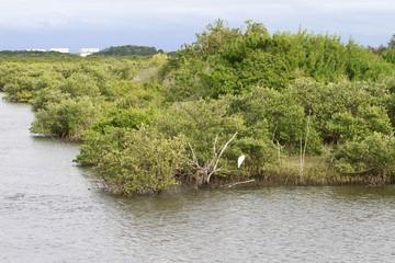 St. augustine canals - vegetation