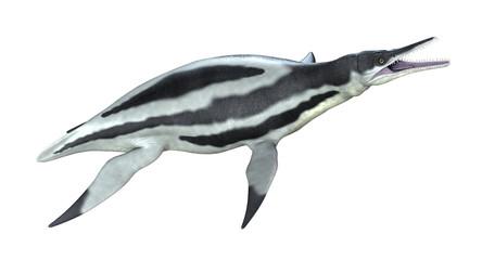 Dolichorhynchops-2 - Aquatic Dinosaur