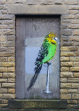 Budgie graffiti