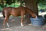 Cavalli innamorati 88