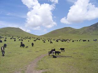 アムドの草原