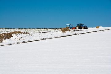 ビート畑とトラクター