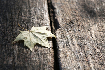 Autumn leaf on wooden background, close-up