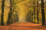 Fototapety Warm autumn colors in a beautiful lane in a forest.