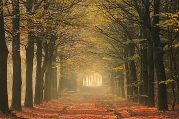 Warm autumn colors in a lane in the forest.