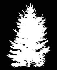 fir tree white isolated silhouette illustration