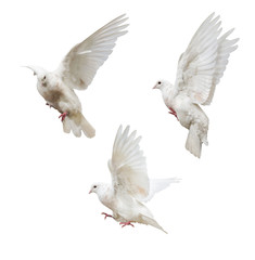 flying isolated three light pigeons