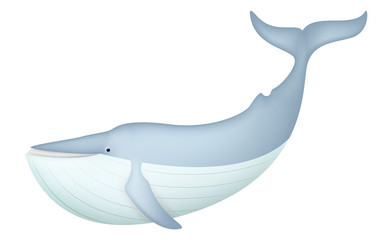 Cute Blue Whale isolated on white
