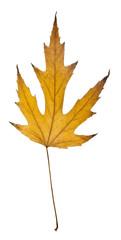 bright autumn leaf