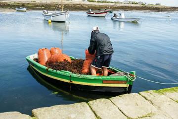 Ramasser algues