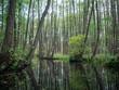 canvas print picture - Kanal in Mecklenburg vom Paddelboot aus