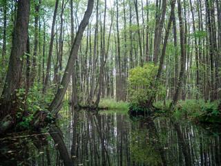Kanal in Mecklenburg vom Paddelboot aus