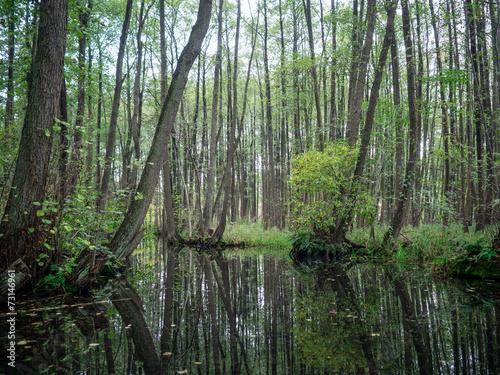 canvas print picture Kanal in Mecklenburg vom Paddelboot aus