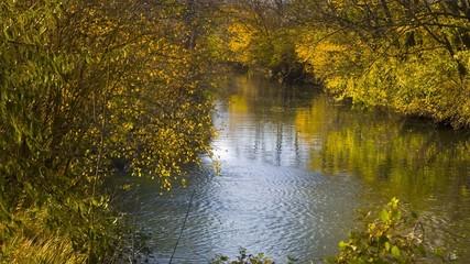 kleiner bewachsener Fluss im Herbst 01
