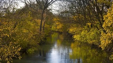 kleiner bewachsener Fluss im Herbst 04