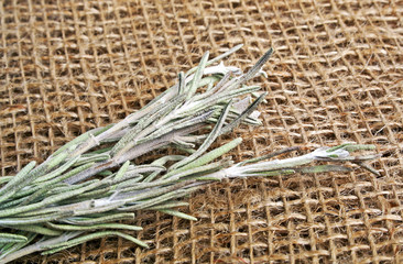 Branch of rosemary on burlap background