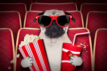 dog at the movies