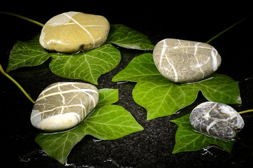 Wet ivy leaves and pebble stones