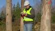 Forest engineer working with tablet PC near the trees