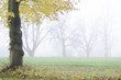 Misty autumn lanscape with trees
