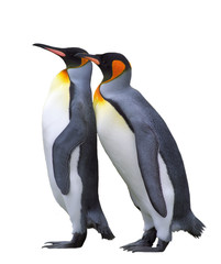 Two isolated emperor penguins